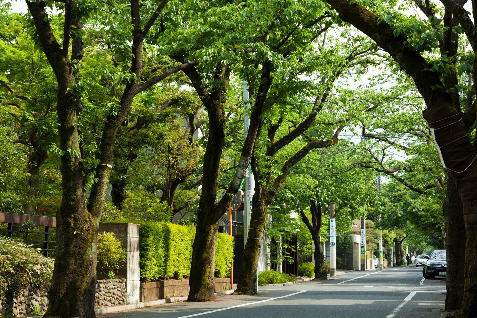 街路樹や生垣の緑が美しい邸宅エリア。 イメージ