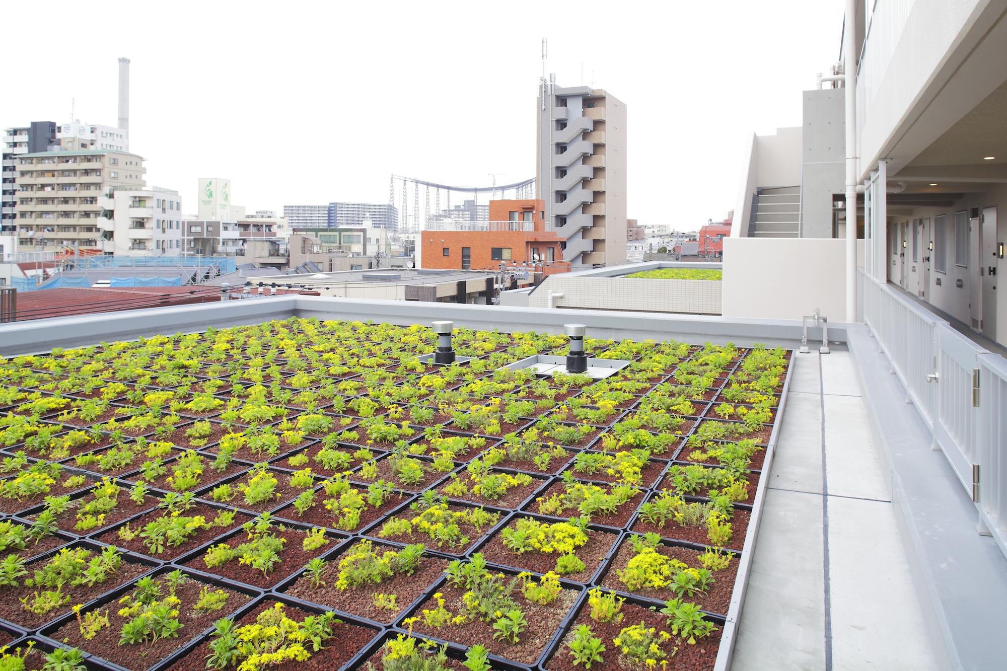 北側屋上緑化 イメージ