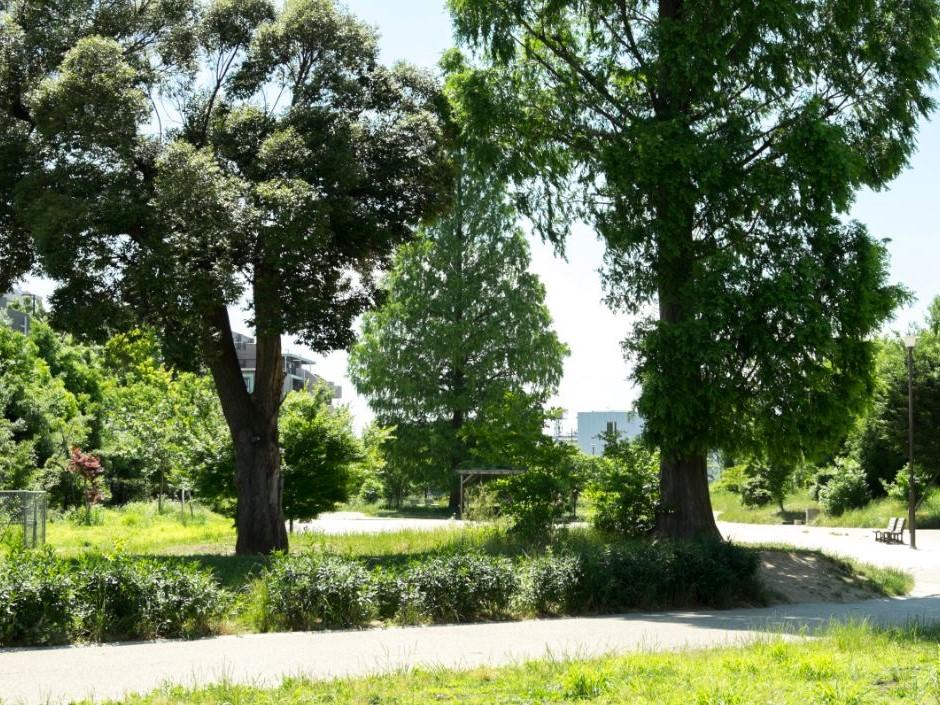 桃井原っぱ公園は子供が大満足する広い公園です。 イメージ